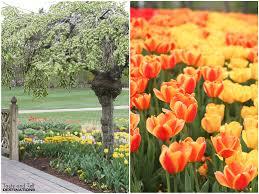 tulip festival at thanksgiving point lehi ut taste and tell