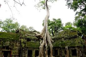 trees and temples ta prohm act of traveling