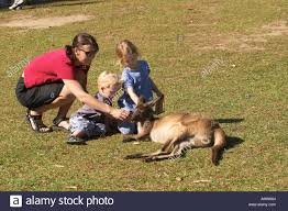 belgian shepherd qld mother and children with kangaroo australia zoo sunshine coast