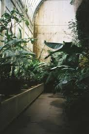 Vitre Louisiana by 243 Best The Conservatory Images On Pinterest Conservatory