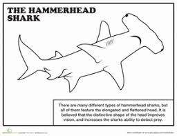 shark coloring pages exprimartdesign com