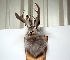 fake deer jackalope wikipedia
