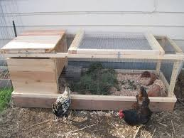 Raising Quail Backyard 169 Best Critters Chickens Ducks And Quail Images On Pinterest