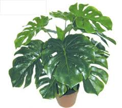 free shipping leaves pcs turtle plants artificial tree home
