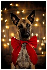 232 best dogs puppies cats u0026 kittens images on pinterest
