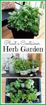 garden design with best easytogrow plants for your indoor herb