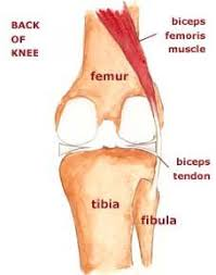 Webmd Human Anatomy Picture Of The Ankle 2012 Webmd Llc All Rights Reserved