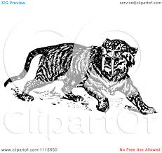 clipart vintage black and white sabre tooth tiger royalty clipart