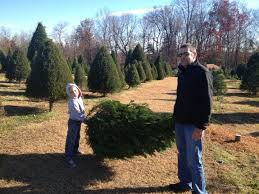 buy christmas tree 23 best choose cut your own christmas tree images on