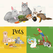 catdog home pets set cat dog parrot goldfish hamster domesticated animals