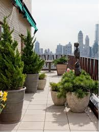planting trees in pots houzz