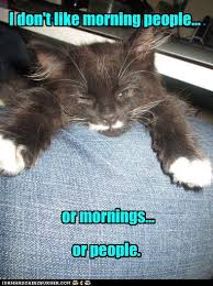 Morning People Meme - speak of the devil a day in the life of a cat