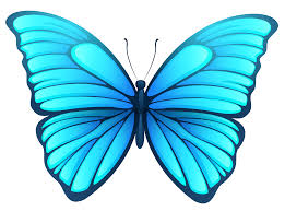 butterfly png image gallery yopriceville high quality images