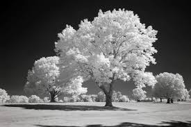 infrared conversions and infrared photography cameras