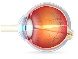 The Anatomy And Physiology Of The Eye Human Eyes