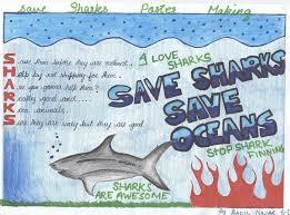 veterans and children united in protecting sharks virgin