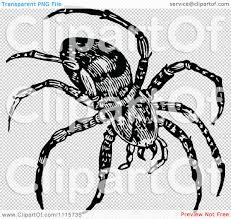 spider transparent background clipart retro vintage black and white spider royalty free vector