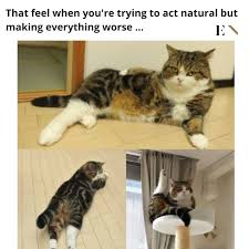 Funny Animal Memes Pictures - 10 funny animal memes that will definitely brighten up your day