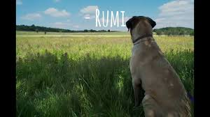 Rumi Memes - rumi there is a field video meme youtube