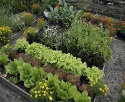 Fall Vegetable Garden Ideas by Garden Design Garden Design With Vegetable Garden Design Ideas