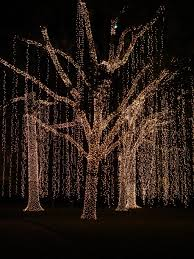 christmas christmas lights outdoor tree picture inspirations the