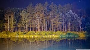 dark woods hd desktop wallpaper high definition mobile dual