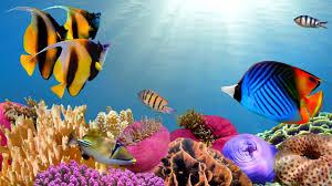 beautiful coral reef aquarium marine ocean fish tank best