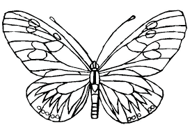 simple butterfly coloring pages jenoni me