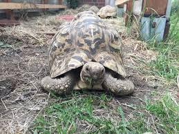 Wo K He Kaufen Schildkröten Kaufen Hier Kauft Man Schildkröten