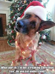 Christmas Dog Meme - 245 best christmas with critters images on pinterest doggies