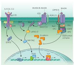 Tissue Renewal Regeneration And Repair Reparative Inflammation Takes Charge Of Tissue Regeneration