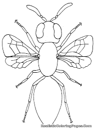 insects coloring pages u2013 barriee
