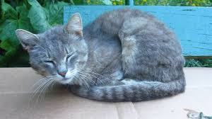 the cat likes to sleep on the bench youtube