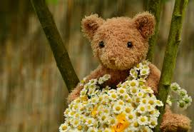 teddy for s day free images flower teddy floral greeting