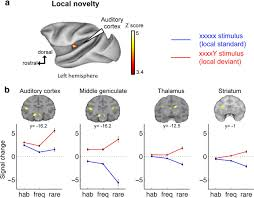 a hierarchy of responses to auditory regularities in the macaque