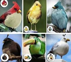 angry birds inspiration mactrast
