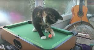 Elliptical Pool Table An Eagle Eyed Cat Expertly Sinks A Couple Of Shots While Playing