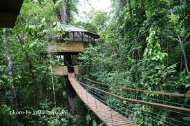bamboo tree house design house design