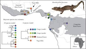 bayesian species delimitation in west african forest geckos