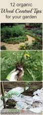 backyard best ideas about garden weeds vinegar