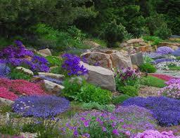 Rock Garden Plant Alpine Perennials The Rock Garden Companion Powerful