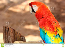 red wing macaw or parrot bird on tropical wild background stock