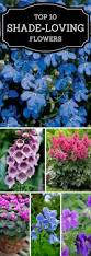 A Garden Of Flowers by Best 25 Colorful Flowers Ideas On Pinterest Beautiful Flowers