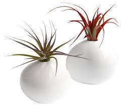 Plant Vase Pebble Air Plants Set Of 2 Modern Plants By Lushmodern