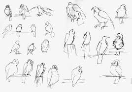 zoo gesture drawings the art and animation blog of kaitlyn fuchs