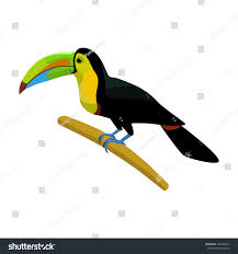 mexican keelbilled toucan icon cartoon style stock vector