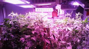 best led grow lights for marijuana led grow light led grow lights best led grow light