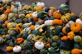 thanksgiving mix free images white flower orange food green harvest