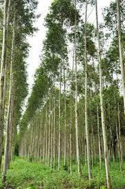 tree physics determine leaf size sciencenordic