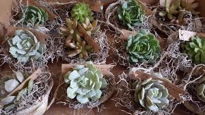 Succulent Pots For Sale 2 5